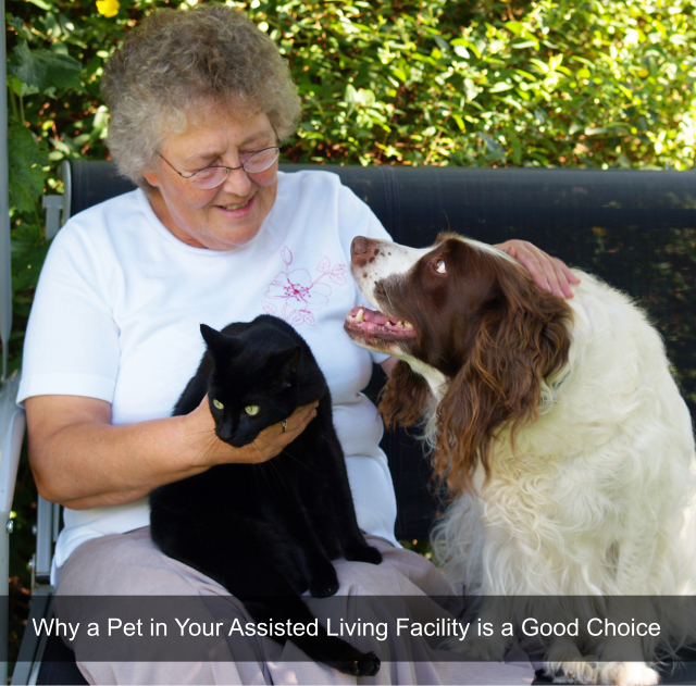 Why a Pet in Your Assisted Living Facility is a Good Choice